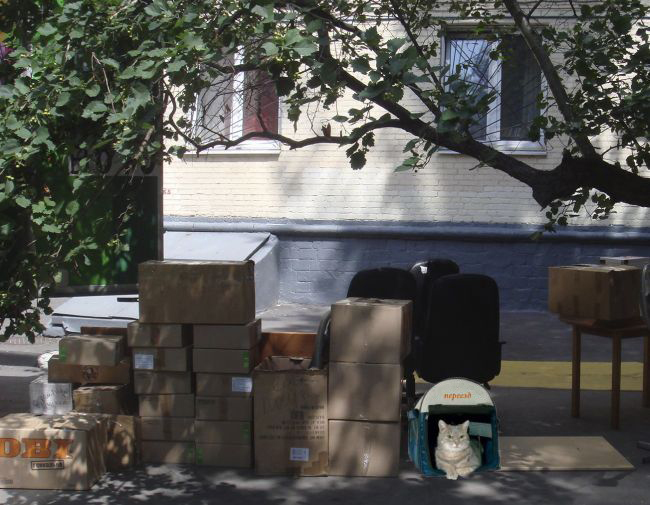 квартирный переезд кошек и собак
